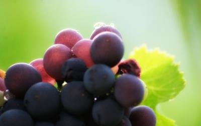 Poggio Lucina, quando il vino rispetta la tradizione e la genuinità delle sue origini